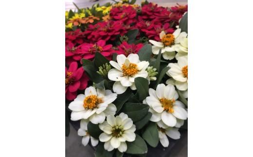 寄せ植えにも適した花色です。