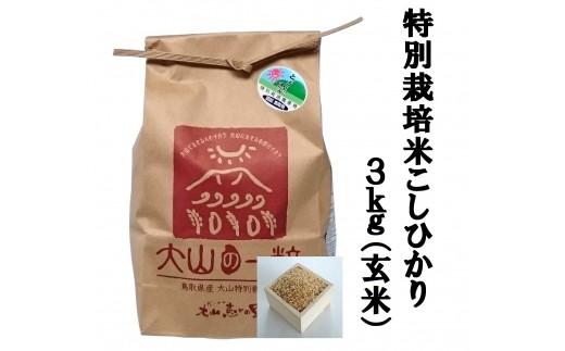 MS-34 特別栽培米こしひかり3kg(玄米)