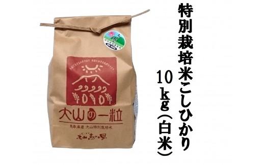 MS-33 特別栽培米こしひかり10kg(白米)