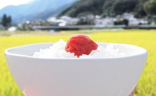 仁淀ブルーの恵み「おち米」 3kg(香り米ブレンド)