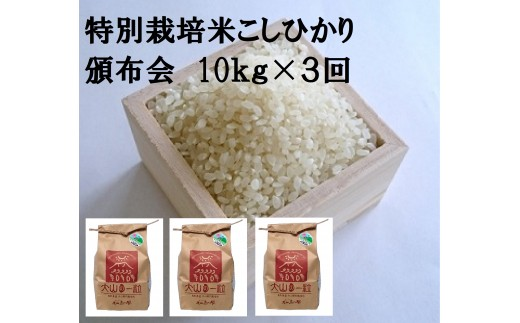 MS-40 特別栽培米こしひかり頒布会(10㎏×3回)