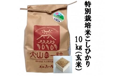 MS-36 特別栽培米こしひかり10kg(玄米)
