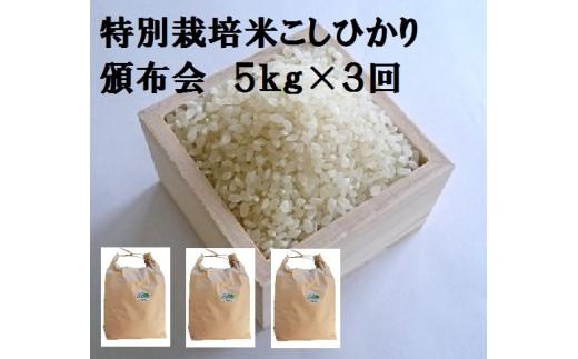 MS-39 特別栽培米こしひかり頒布会(5㎏×3回)