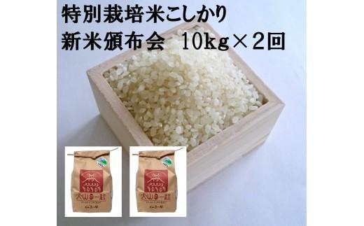 MS-41 特別栽培米こしひかり(新米)10㎏×2回