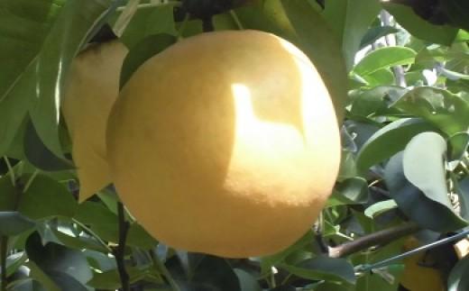 D-5-19 肥沃な土地が育てた八千代町産「あきづき梨」5㎏ 2019産先行予約受付