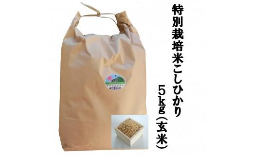 MS-35 特別栽培米こしひかり5kg(玄米)