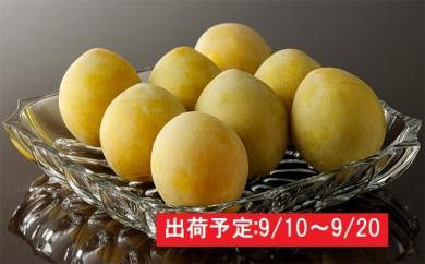 [№5823-0470]最高級大玉プラム「光李(ひかり)」約2kg 大江町産