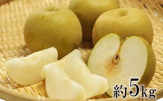 庄内の和梨(1箱約5kg)