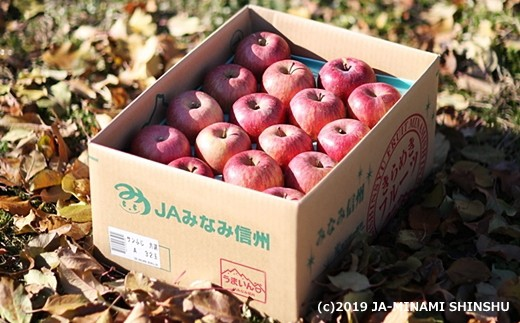 A-36 りんご サンふじ※ワケあり※【約10kg】