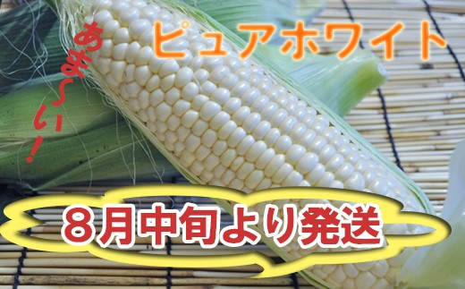 HMG342 【早期予約】8月中旬発送!!スイートコーン/ピュアホワイト