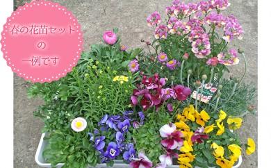 [№5753-1163]【生産者直送】季節の花苗セット