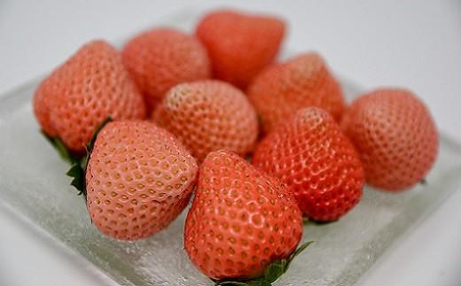 完熟しても真っ赤にならない淡い桃白色の希少ないちごです。