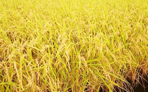 安心安全な「特別栽培米」