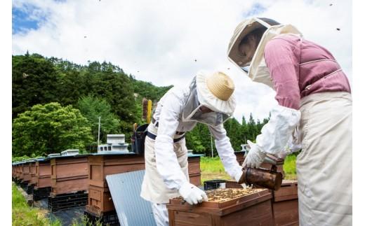 生まれ故郷の西和賀で養蜂家人生をスタートさせた髙橋さん親子