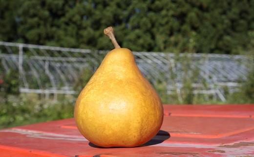 0011-2002 西洋梨(オーロラ)5kg