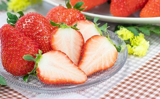 AA050採れたてイチゴをたっぷりお届け みずみずしいイチゴセット