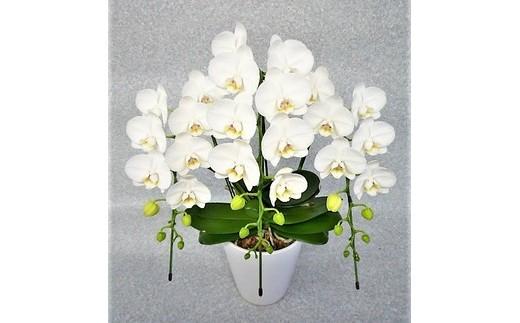 カラー:白