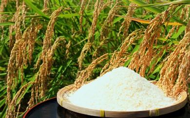 [№5819-0161]東吾妻町産 特別栽培ブランド米 さくや姫 5kg
