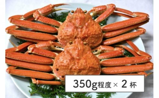 1902-08松葉蟹A