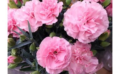 [№5809-3647]【クレカ限定】母の日に!優しいピンク色のカーネーション鉢植え 5号カゴ付