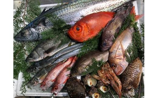 69.季節の高級鮮魚セット