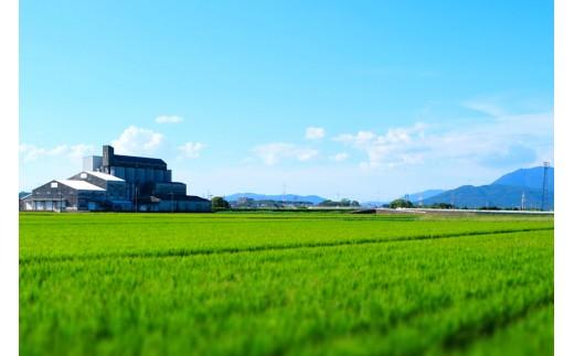 定期便】肥沃な筑紫平野で育った 福岡県産 ヒノヒカリ 無洗米(10kg×6回 ...