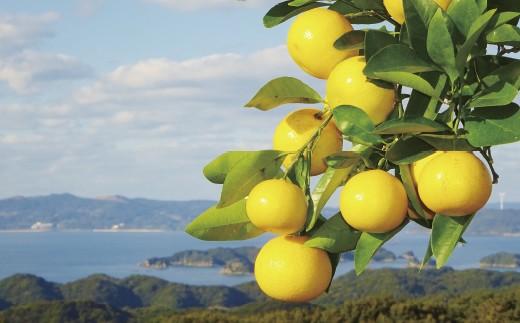 T340 させぼレモン(新種和レモンみよし)しぼり【500pt】