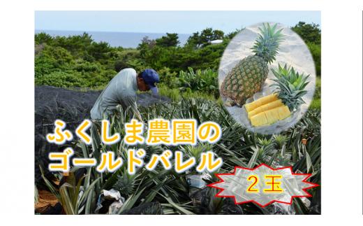 【沖縄県東村産】ふくしま農園のゴールドバレル(2玉)3.5kg