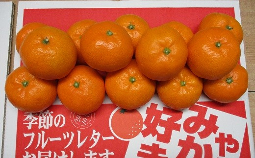 A02-704 玉津みかん(早生温州)【11月お届け】※予約受付