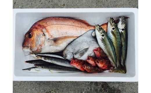 季節によってお届けできるお魚の内容が変わります。