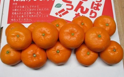 南柑20号(12月頃お届け)
