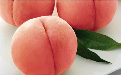 【期間限定】川中島白桃 3.2kg