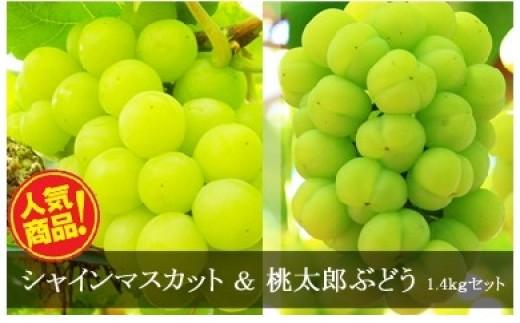 c-0052 岡山県産シャインマスカット&桃太郎ぶどう(約1.4kg)