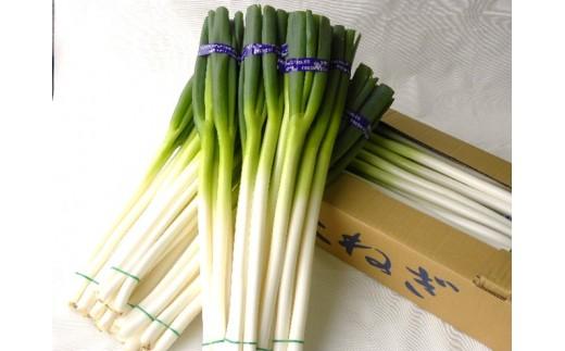 旬菜便り! 三川の長ねぎ2箱セット