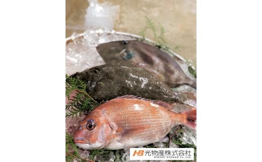A-81 鳴門北灘粟田漁港直送『網元山仁の魚』鮮魚直送便 約2kg