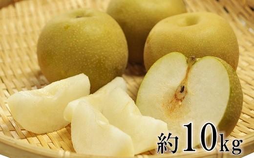 庄内の和梨(2箱約10kg)