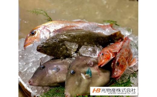E-23 鳴門北灘粟田漁港直送『網元山仁の魚』鮮魚直送便 約4kg