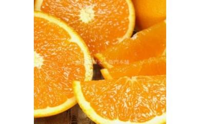 ■田村産清見オレンジ[約4.5kg]湯浅町田村産春みかん/紀伊国屋文左衛門本舗
