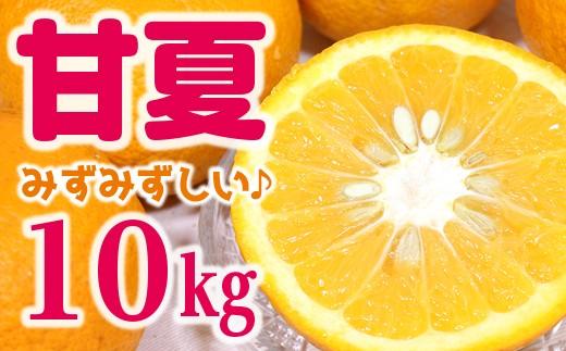 ◇庄右衛門の甘夏10kg