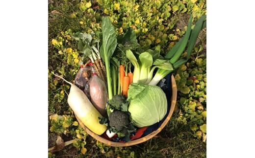 <こだわり農法で育てた>野菜詰め合わせ(約10点セット)【1015217】