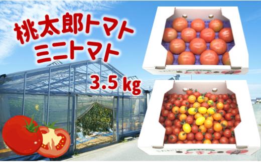 W3 蘇鉄園芸のトマト三昧 (ミニトマト2kg + 桃太郎トマト14個)