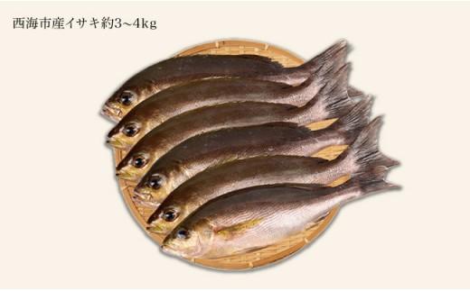 CAA013 【新鮮直送!】西海市産イサキ詰め合わせ 3~4kg分 (カタログコード:B-15)-2