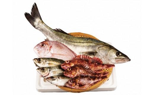 CAA011 西海市産旬の魚貝類詰め合わせ (カタログコード:B-11)-2