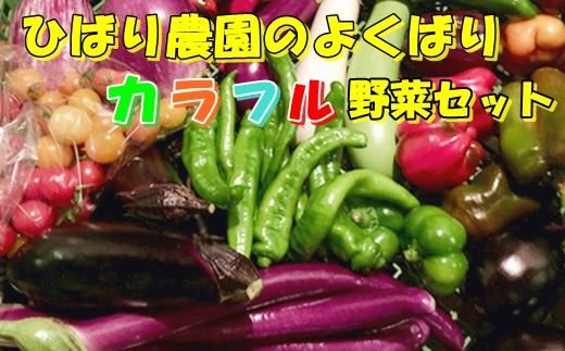 ひばり農園のよくばり無農薬カラフル野菜セット《予約受付 10月より発送開始予定》 【364】