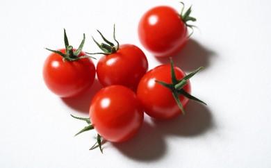 [№5644-0639]HOSONO FARM ミニトマト「Tomary(トマリー)」約1kg