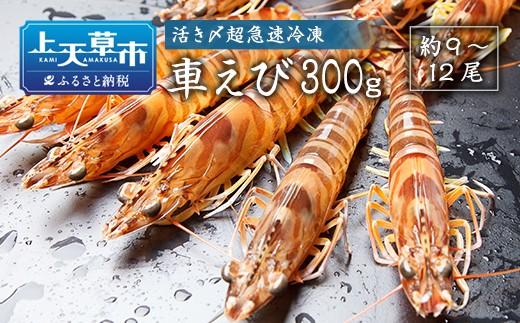 【上天草ブランド認証品】活き〆超急速冷凍車えび300g(約9~12尾)