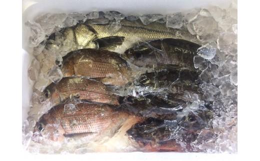 CAA011 西海市産旬の魚貝類詰め合わせ (カタログコード:B-11)-3