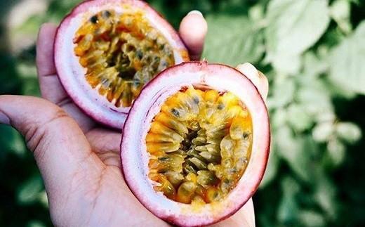 果実の中身