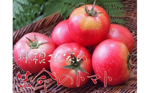 飛騨のトマト名人坪根さんが作るGABAたっぷり生命のトマト 大玉2キロ[b0207]