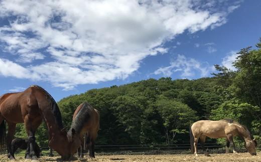 馬のお世話体験とふれあい乗馬【キッズ】